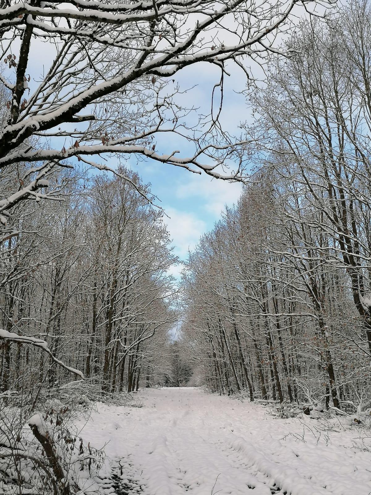 3. Platz Waldstrecke bei Schönhagen