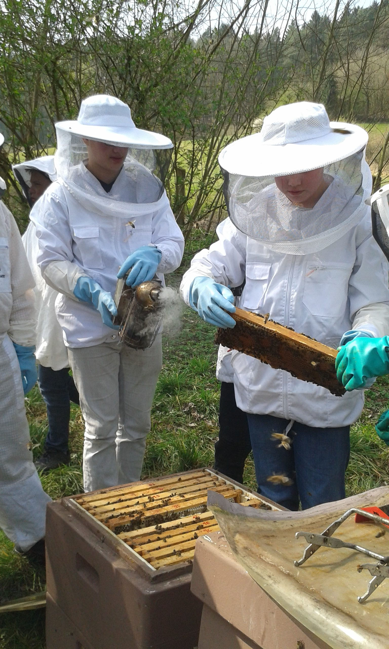 wöchentliche Kontrolle bei den Bienen (4)