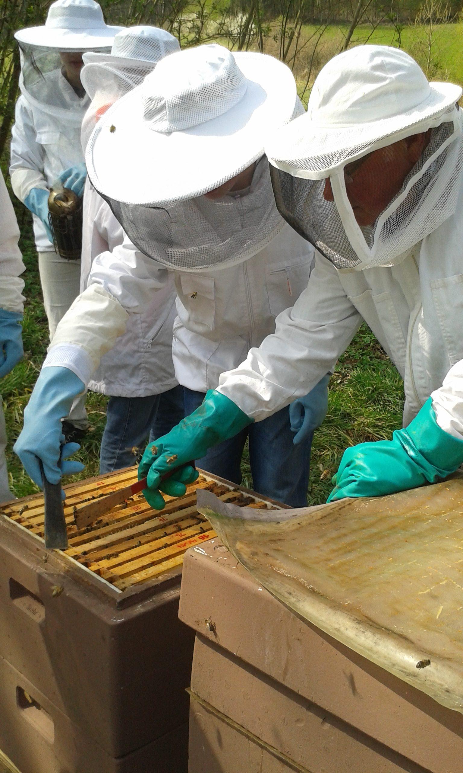 wöchentliche Kontrolle bei den Biene (3)