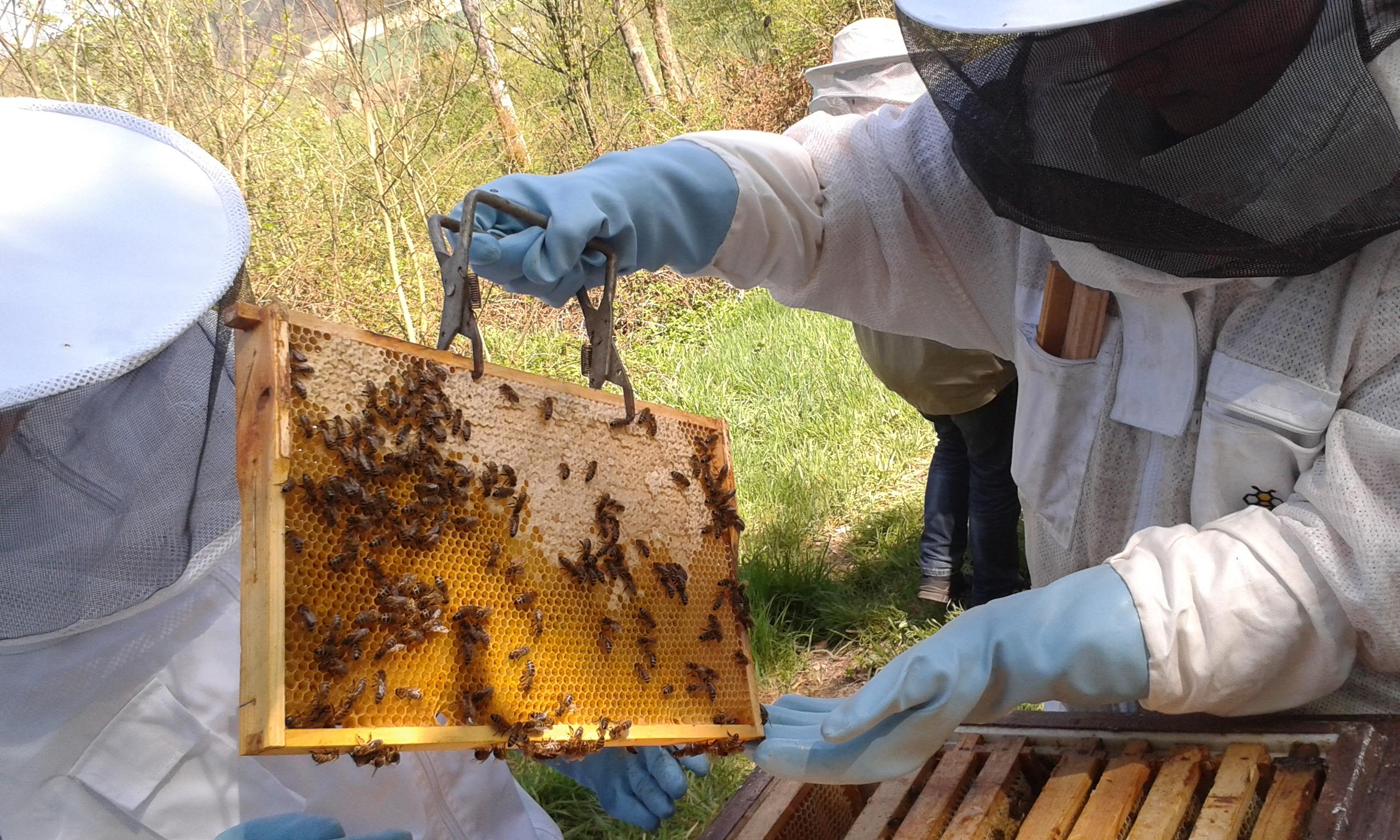 wöchentliche Kontrolle bei den Bienen