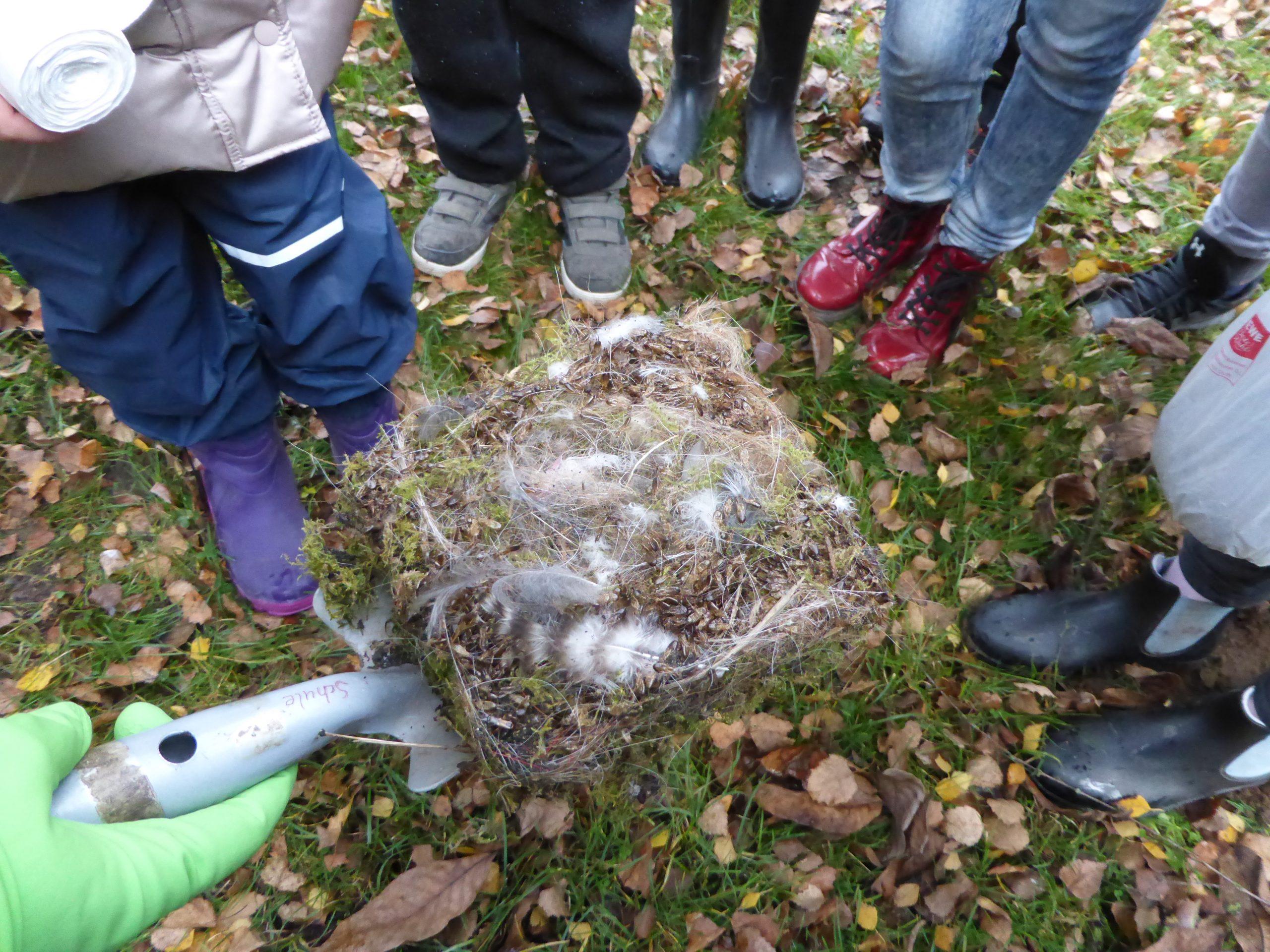2020 Nest aus Vogelhäuschen