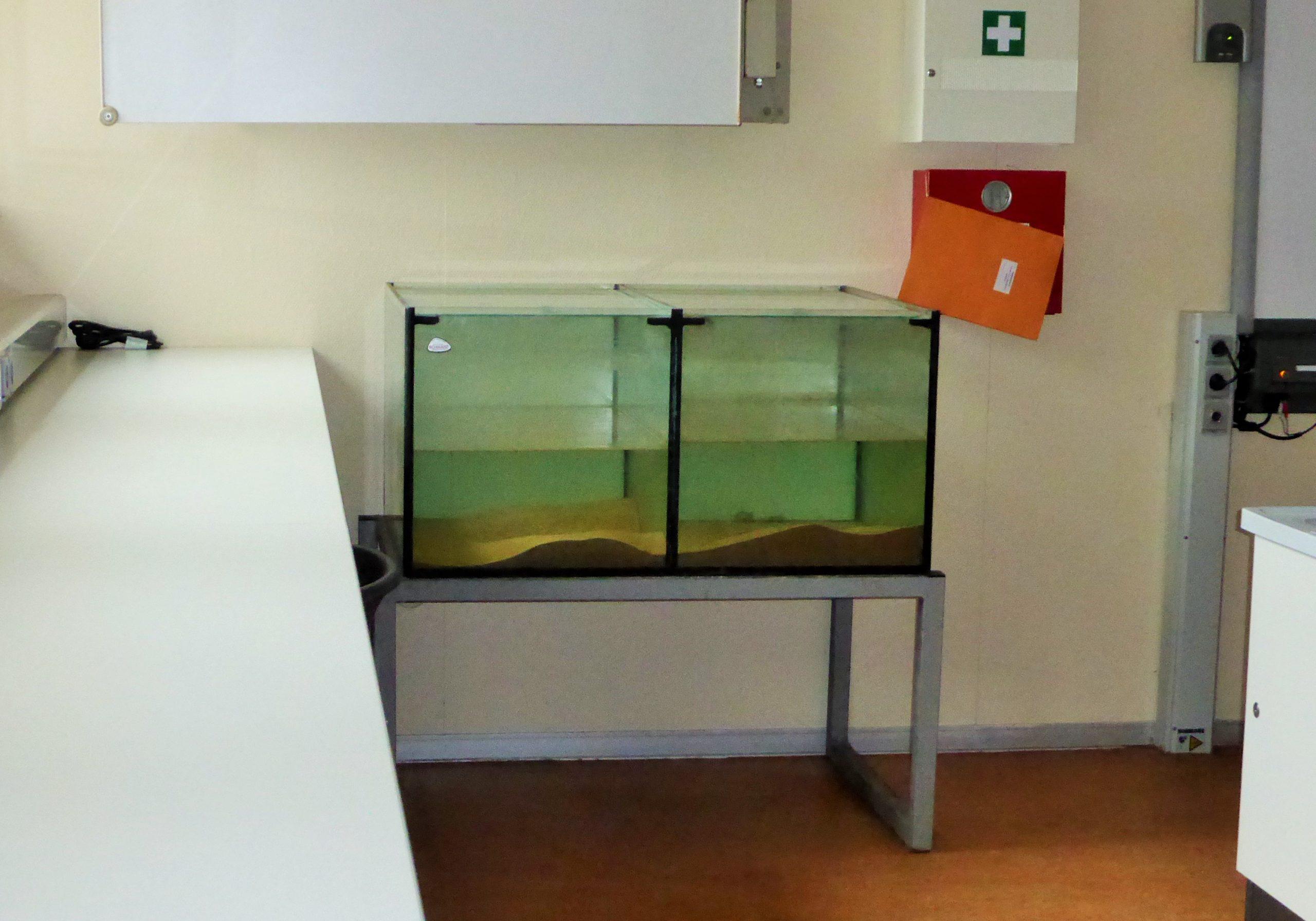 2021 das neue Aquarium zu Experimentierzwecken