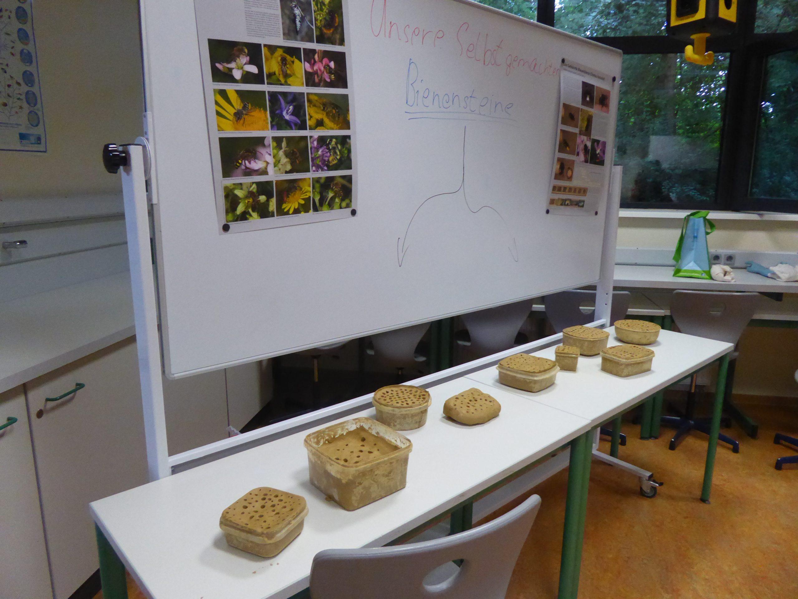 Hergestellte Bienensteine während der Projektwoche