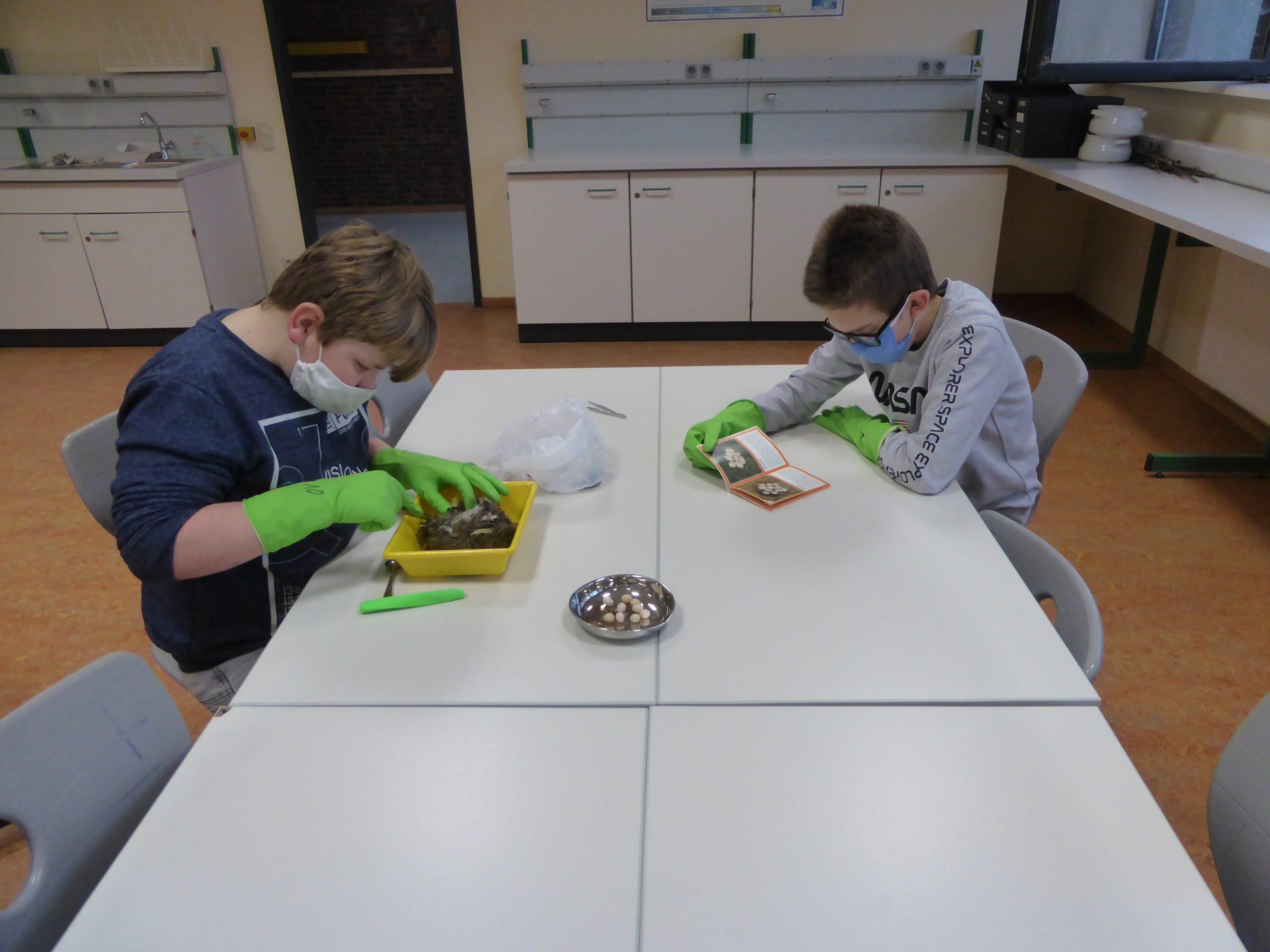 2020 Schüler untersuchen Nester im Unterricht (2)