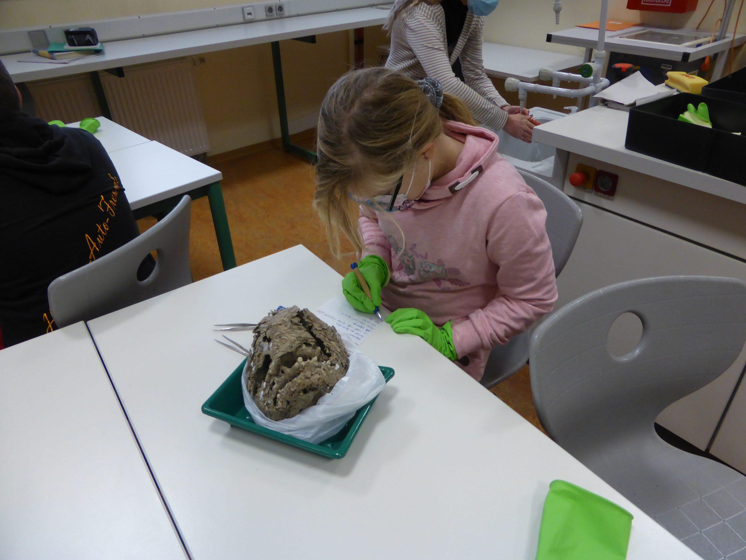 2020 Schüler untersuchen Nester im Unterricht (3)
