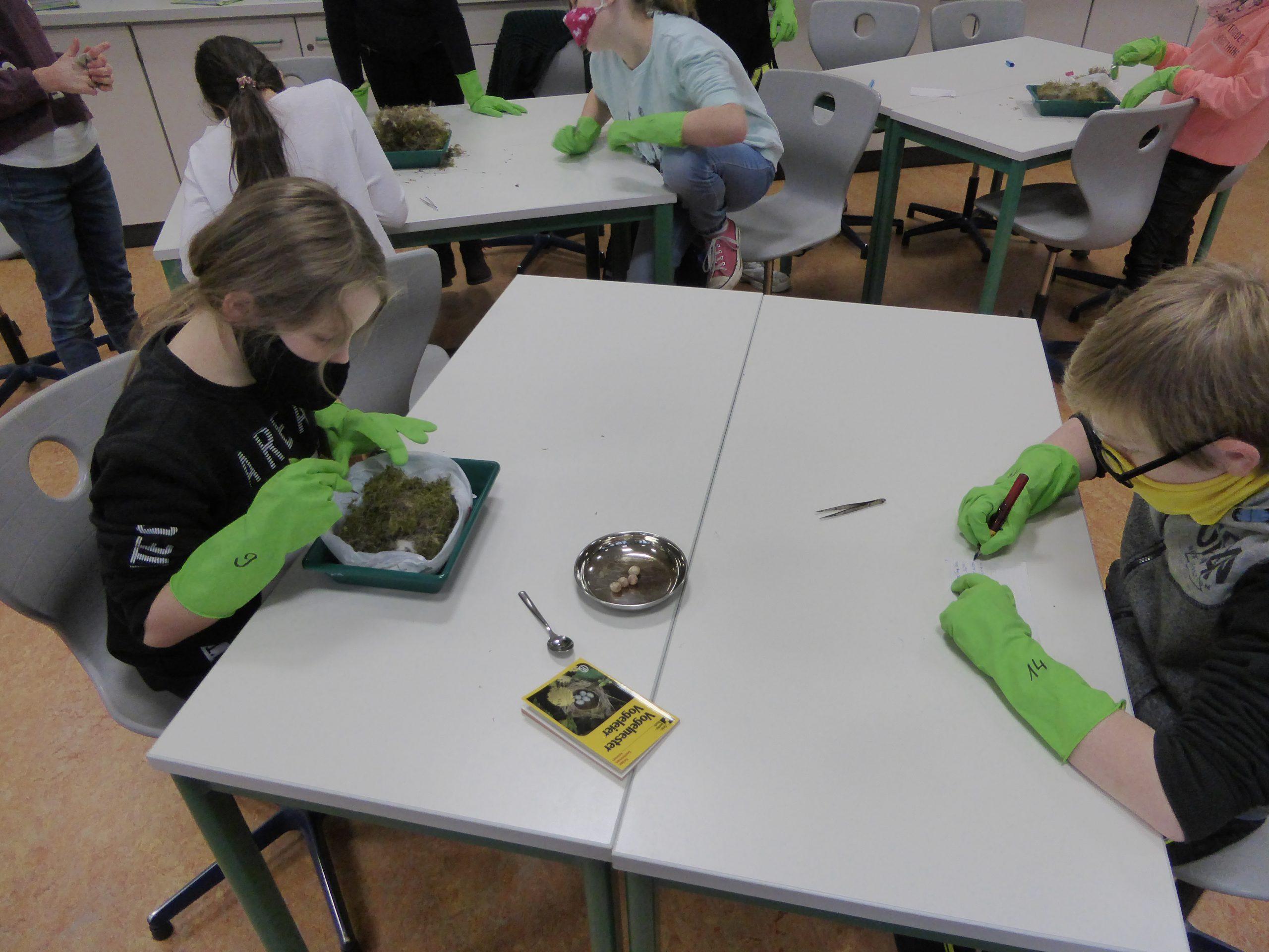 2020 Schüler untersuchen Nester im Unterricht